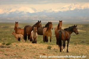 horse family on the range