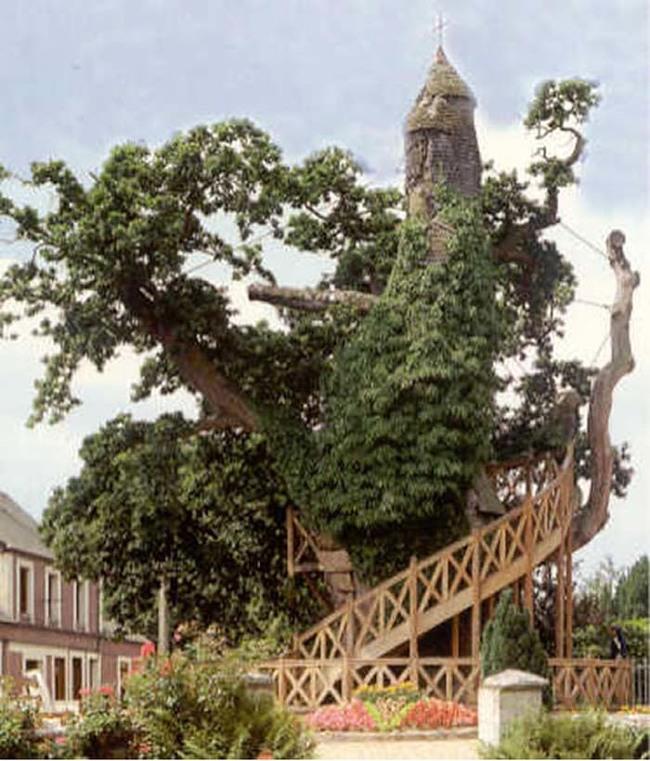 Chapel oak