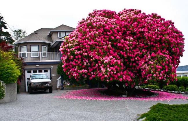 Fantastisch schöne Bäume aus aller Welt | Transinformation