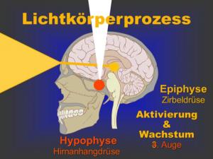 Epiphyse