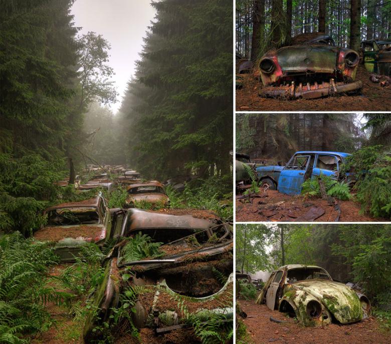 Autos im Wald