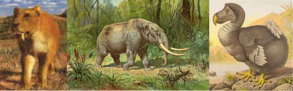 Tiger-Mastodon-Dodo