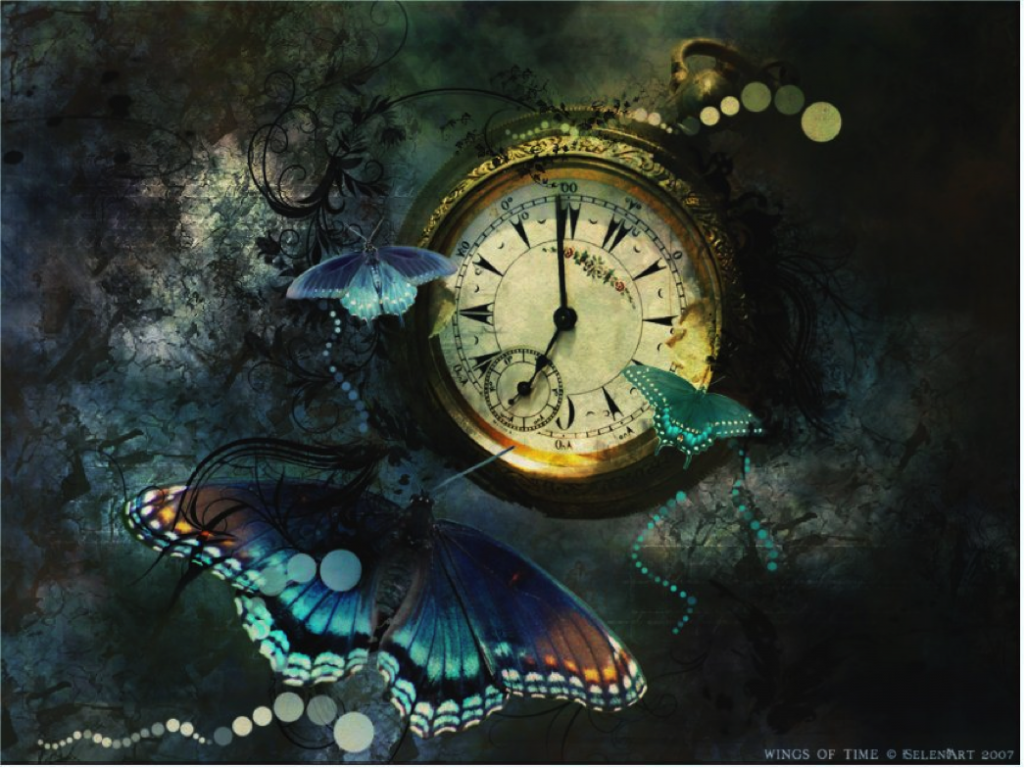 Schmetterling Zeit