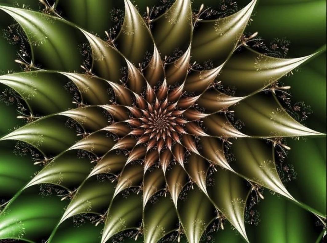 Was uns die Natur über Heilige Geometrie lehren kann