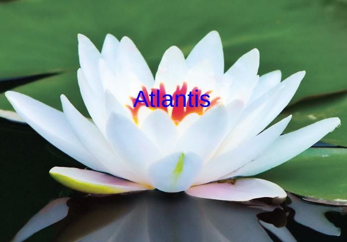 atlantis-lotus