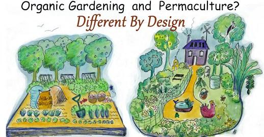 Bio Garten Und Permakultur Die Unterschiede Transinformation