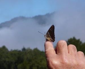 Shinrin-Yoku-Butterfly