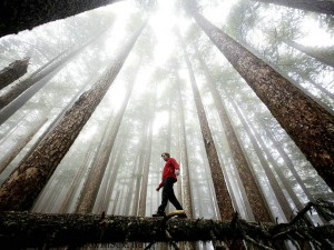 Shinrin-Yoku-Forest-Bathing-1