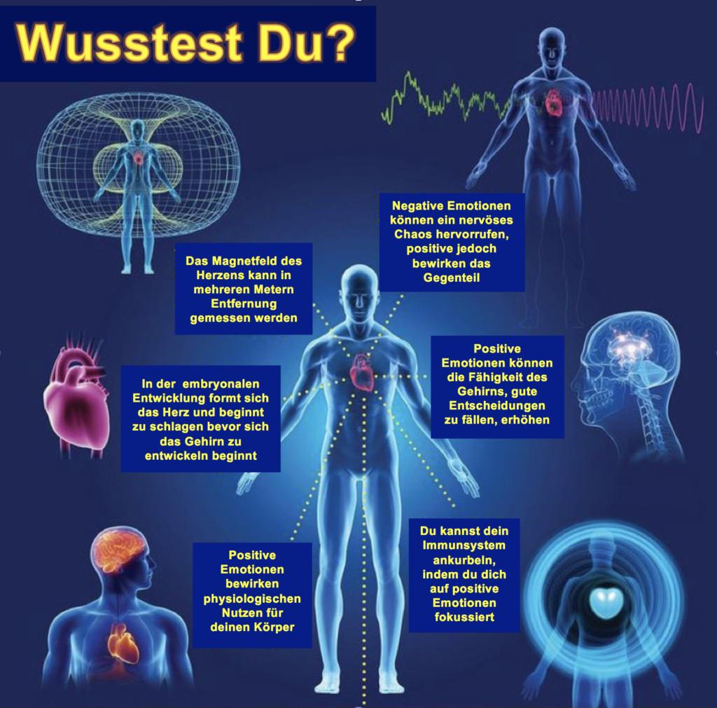 Großartig Herzblutversorgung Anatomie Zeitgenössisch - Menschliche ...