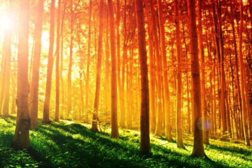 Erstaunliche Eigenschaften des Sonnenlichts, von denen du möglicherweise noch nie gehört hast