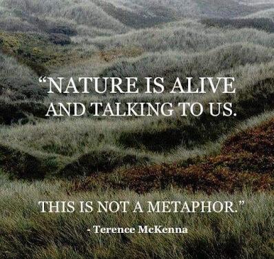 Die Natur ist lebendig ~ Terence McKenna & Eric Raines