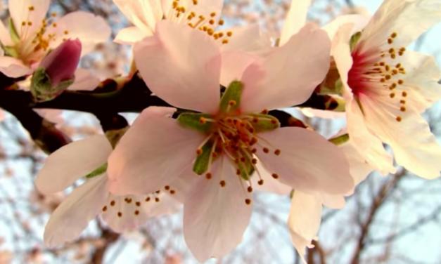 Es ist Frühling – Zeit, um mit Dankbarkeit zurückblicken und mit Hoffnung in die Zukunft zu schauen