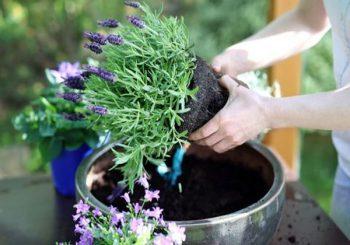 Beginne mit Gartenarbeit für deine psychische Gesundheit